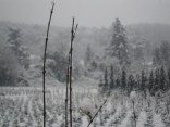 Belgrade Forest (Istanbul) under snow, January 2012 (photo 92 of 95)