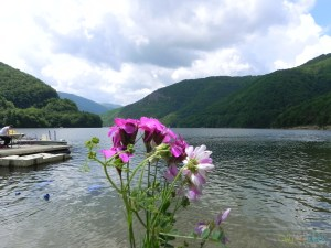 Tarnita barrage lake