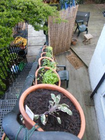 herbs-on-fire-escape-4