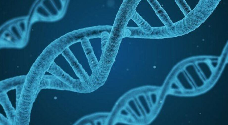 le-cellule-convertono-rna-in-dna:-la-scoperta-che-demolisce-il-dogma-della-biologia