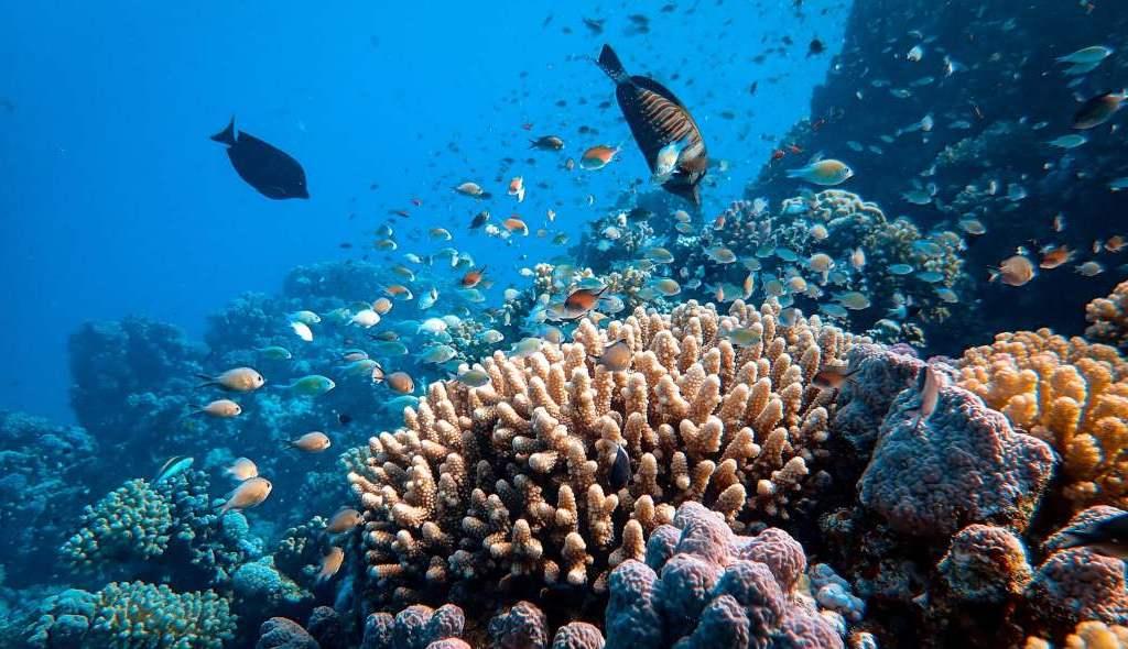 i-prossimi-10-anni-segneranno-il-destino-dei-coralli