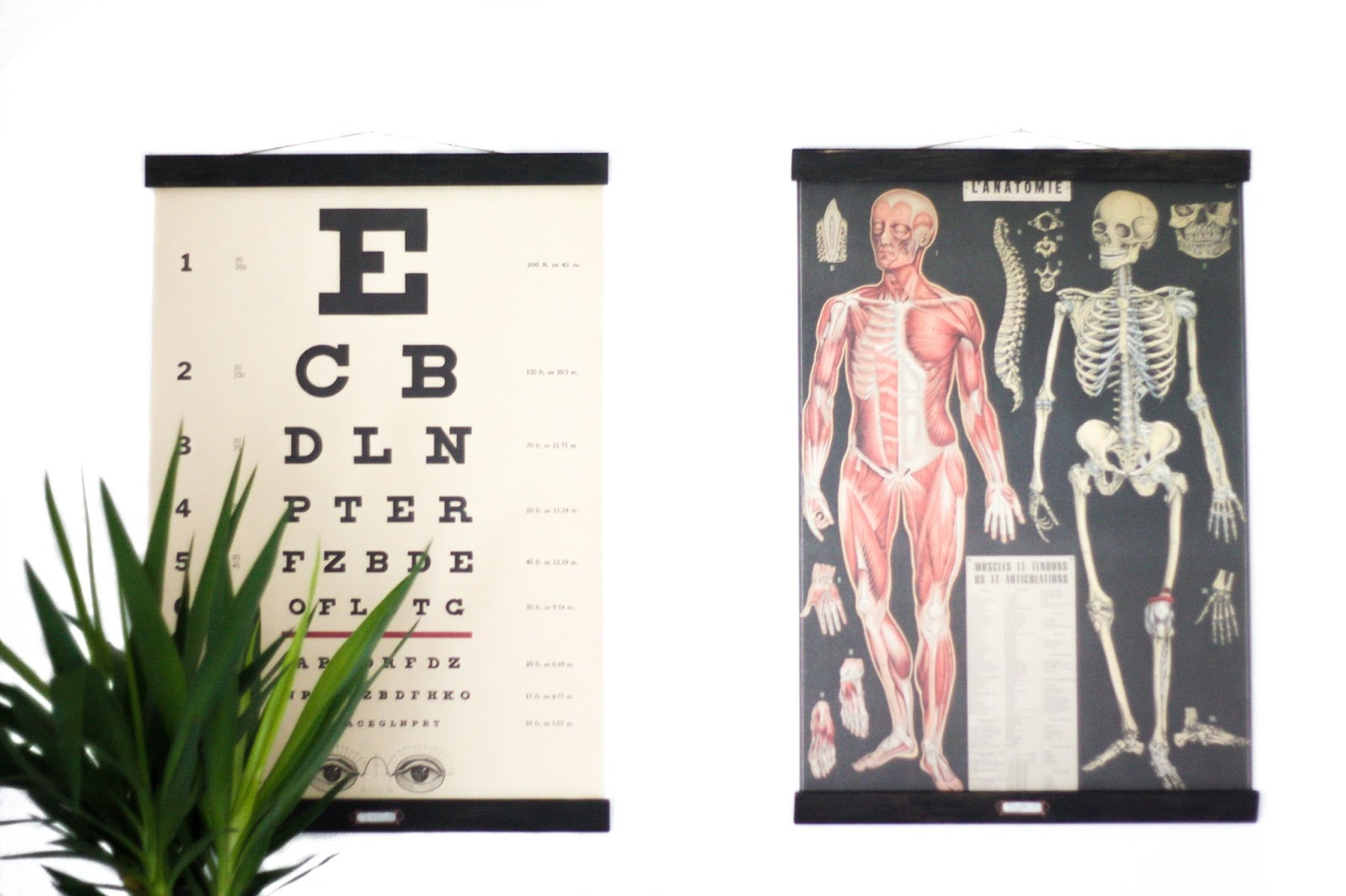 Vintage apothecary posters with frames