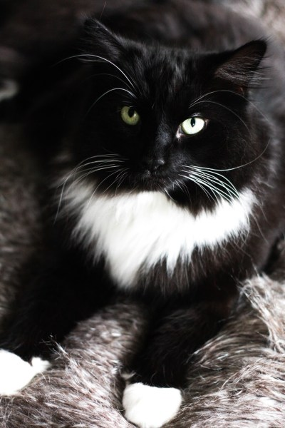 Feline Foodology: Complete wet food by Lily's Kitchen