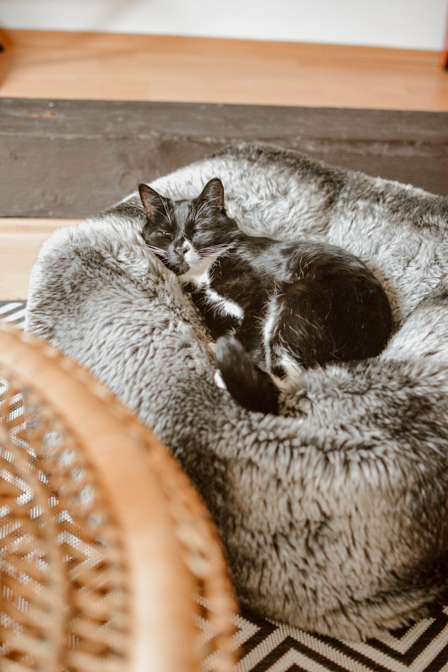 Feline Foodology: Freeze dried salmon by Cosma