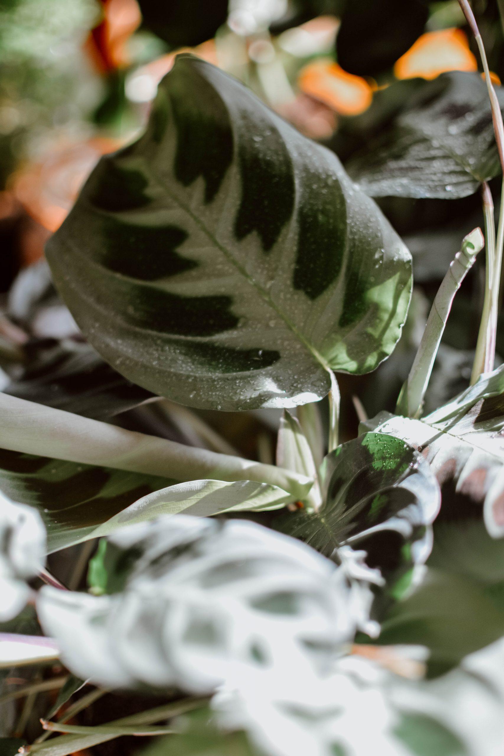 8 homemade zero waste plant fertilisers