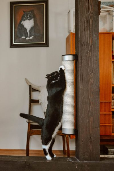 A wall-mounted cat scratcher made out of 85% recycled material