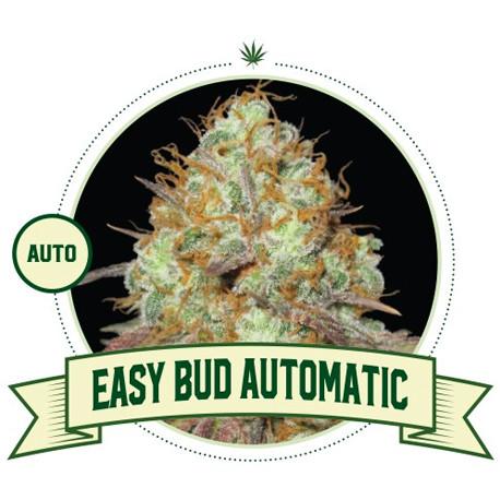 Easy Bud Auto
