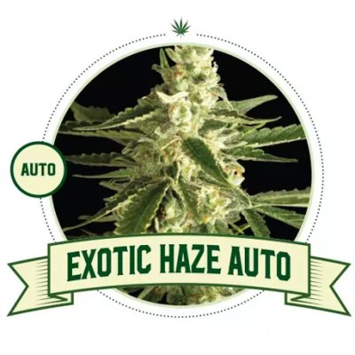Exotic Haze Auto