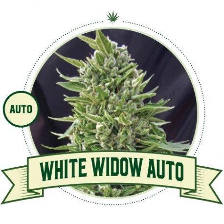 White Widow Automatic
