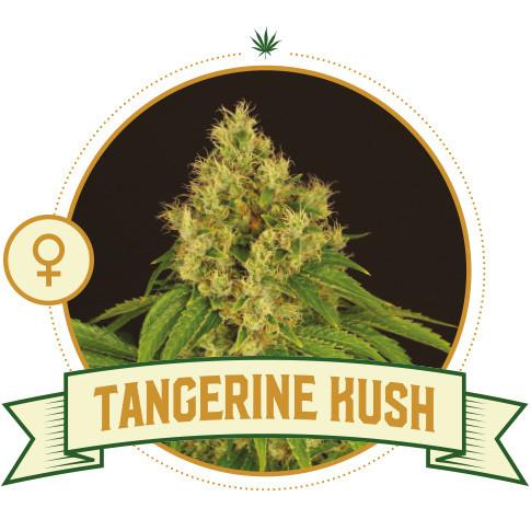 Tangerine Kush