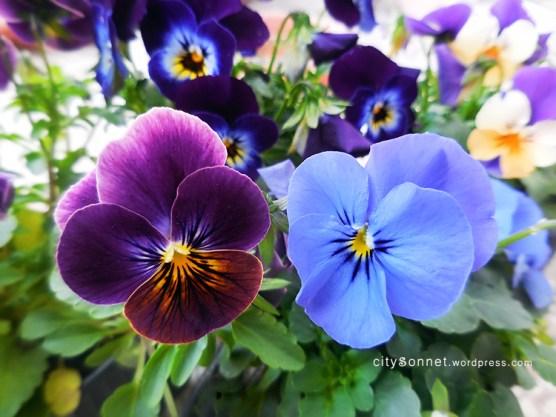 purpleblueviola