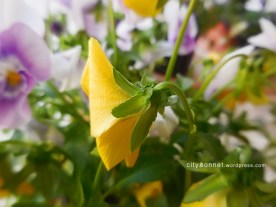 yellowpetal