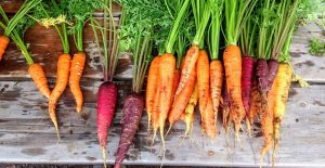 Supporting food security through local, circular food systems