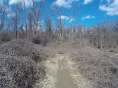 Dumbarton Oaks Trail
