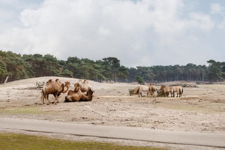 hr-2019-08-28-libema-beekse-bergen-safaripark-018