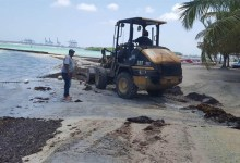Photo of Ayuntamiento y Obras Publicas retiran ocho toneladas de sargazo de playa de Boca Chica