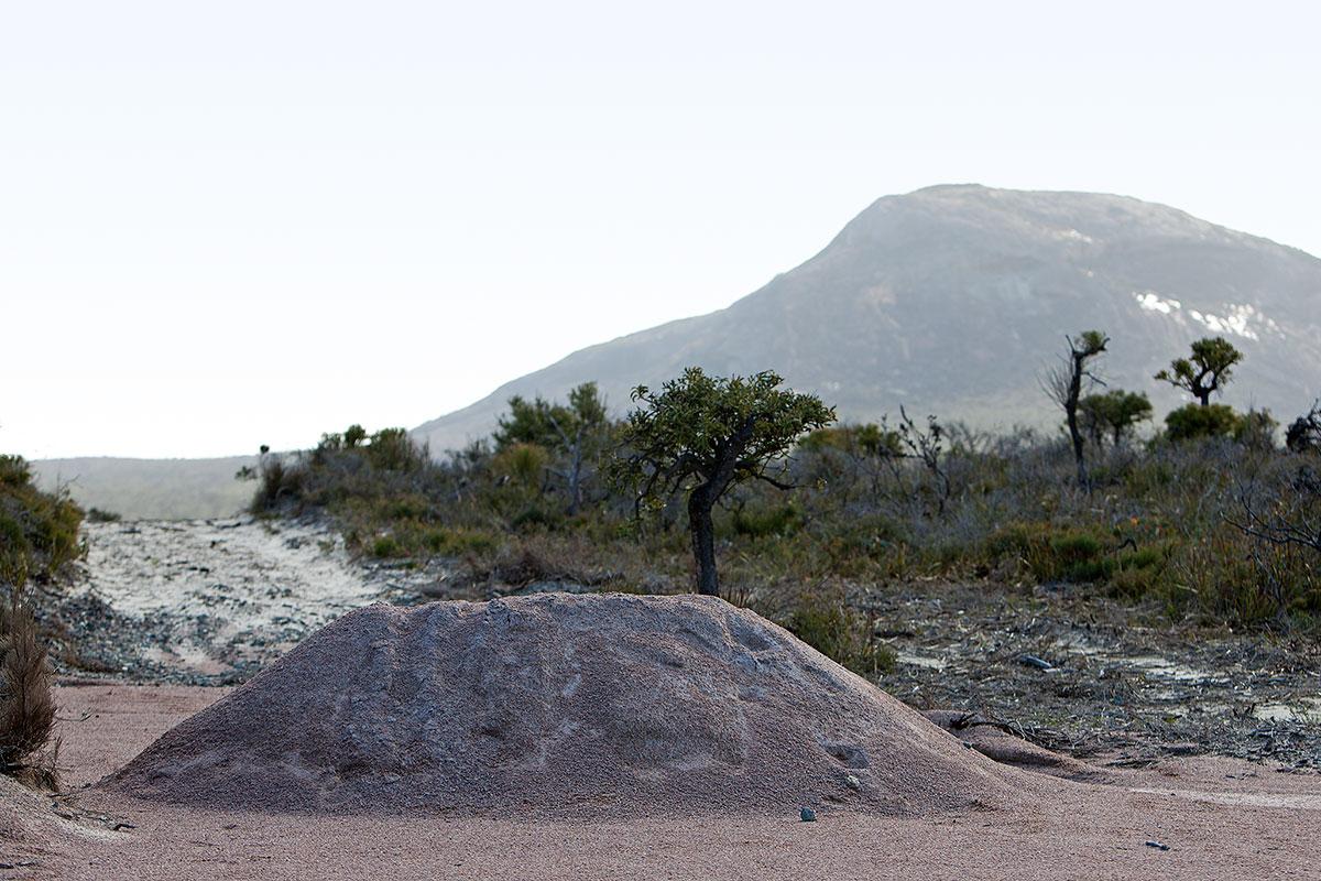 Jamie Holcombe - Civic Malaise - Cape Le Grande