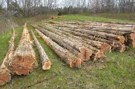 Types of Timber
