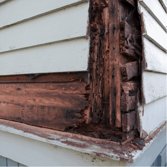 Termites in House and How to Get Rid of Termite Attack