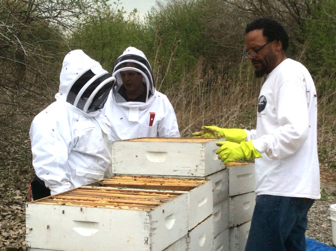 Westside Bee Boyz employees working amongst beehives.