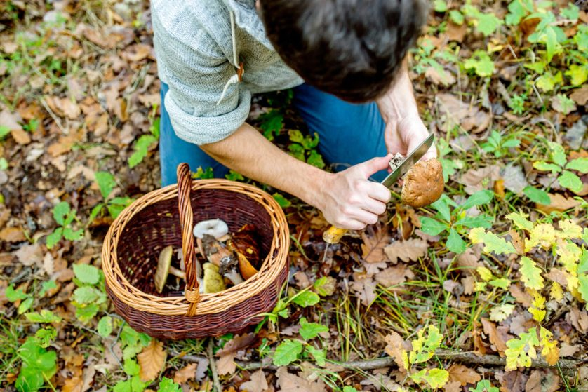 Foraging is Alive and Well in Baltimore. Can it Help Fight Hunger ...
