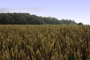 Crops of Kharif Season are Rice,Maize,Jawar,Bajra.