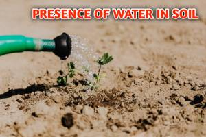 Presence Of Water In Soil