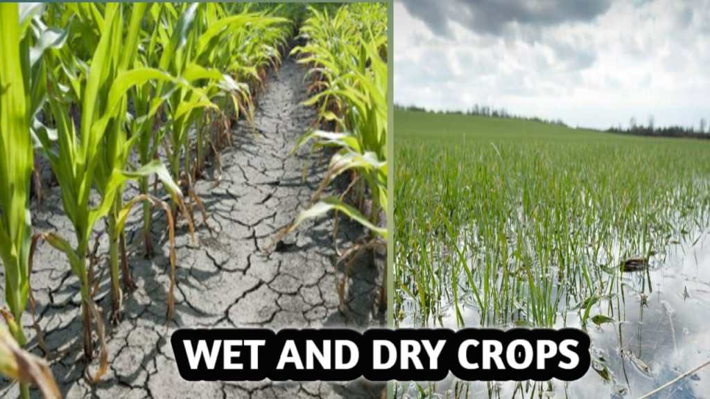 WET AND DRY CROPS