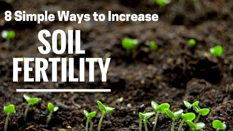 Read more about the article METHODS OF IMPROVING FERTILITY OF LAND