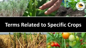 Some important terms as applied crops