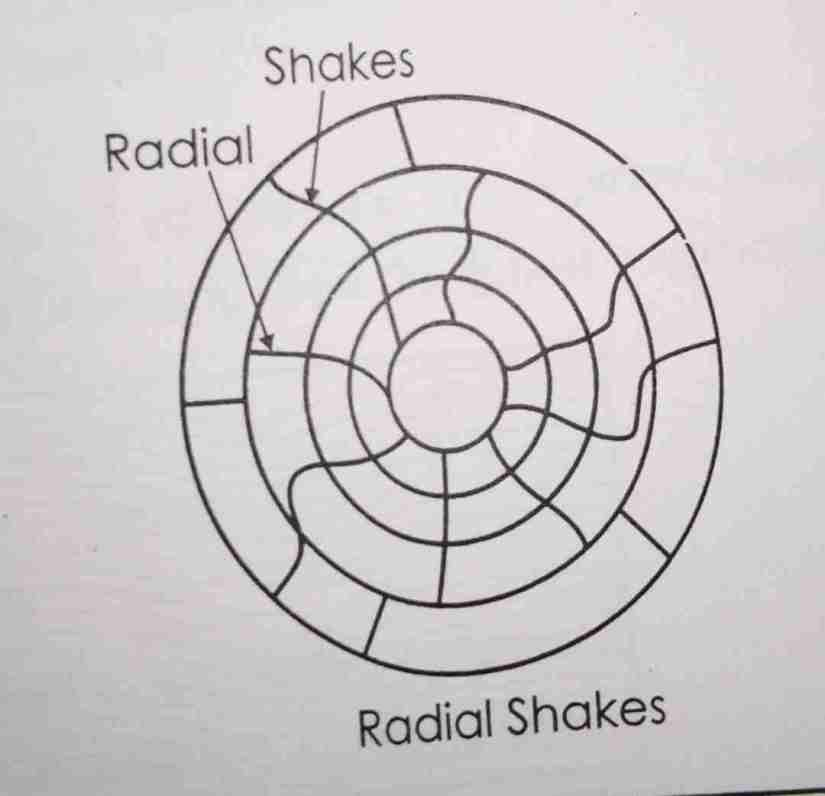 radial shakes timber defects