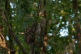 11-dsc_1898-owl-looking-away-smallest-w-credit-copy