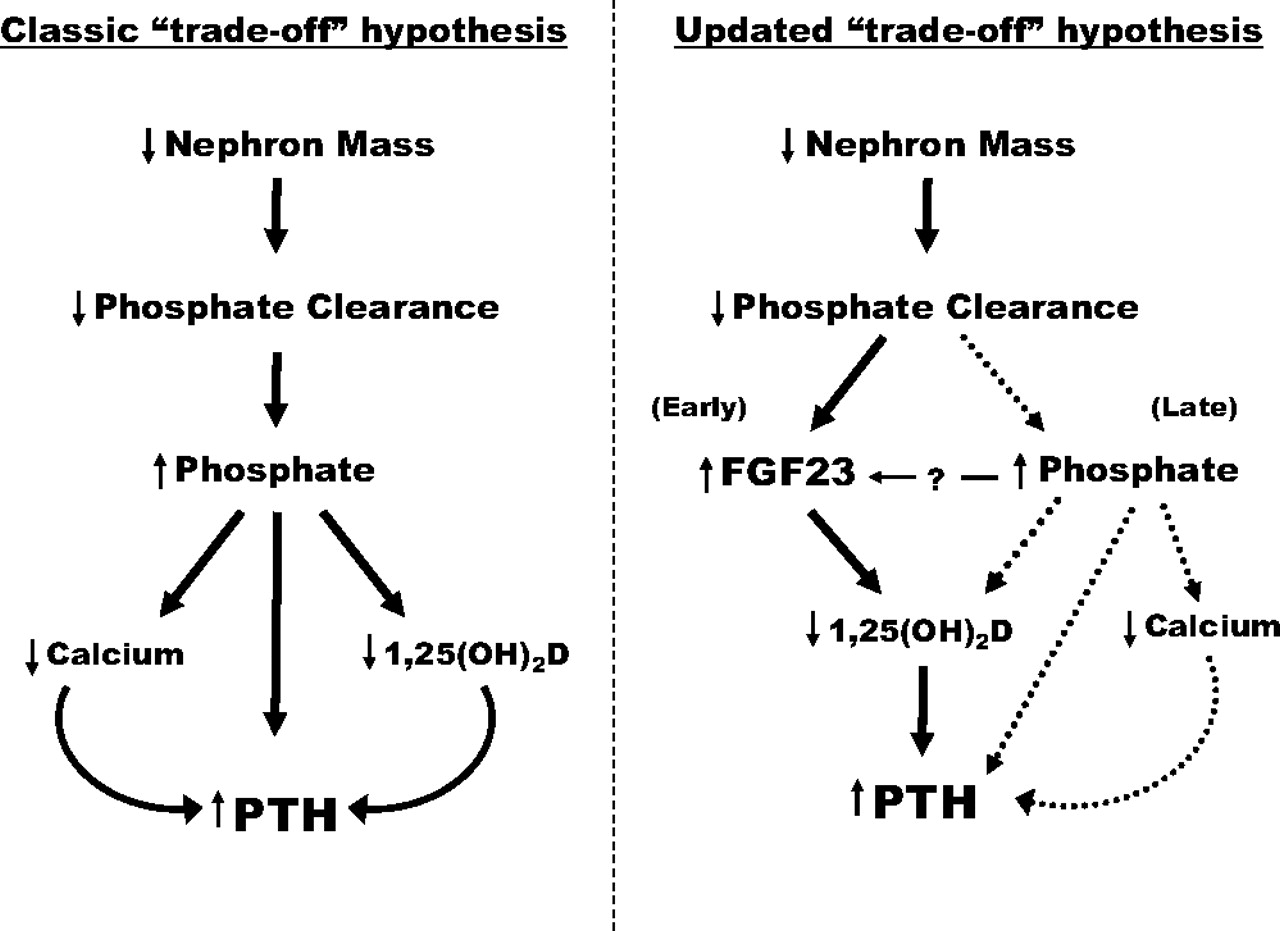 Fibroblast Growth Factor 23 And Disordered Vitamin D