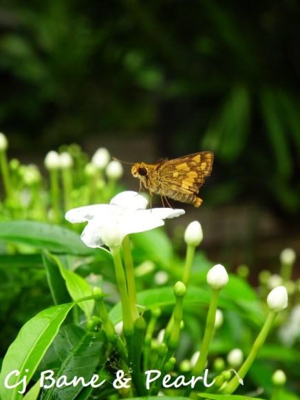 A lil friend