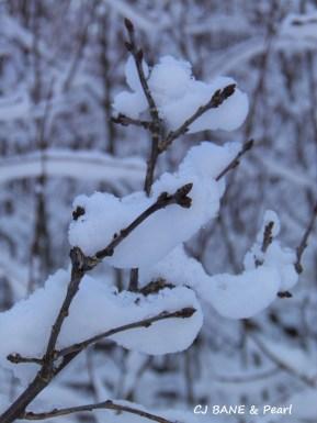 Snowflakes leaves