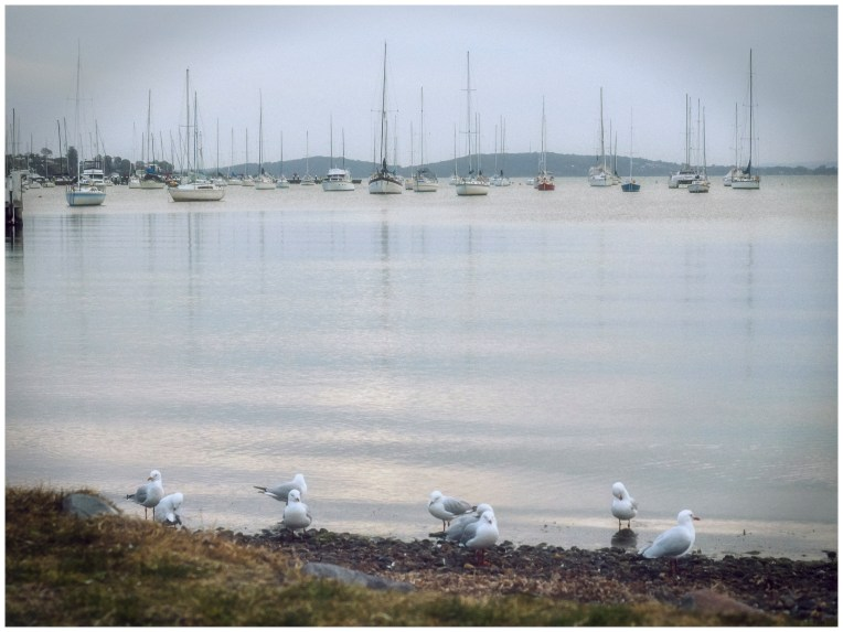 Belmont Seagulls