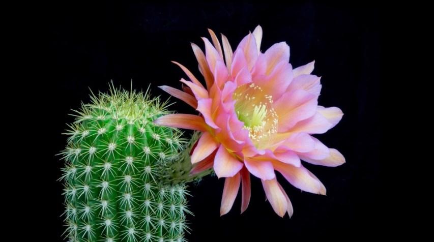 Freaky Flowers 1