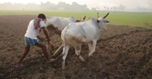 New MSP for Kharif crops