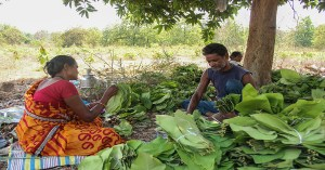 Attempt to weaken Forest Produce scheme