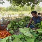 Attempt to weaken Forest Produce scheme