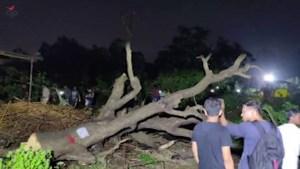 Aarey Tree
