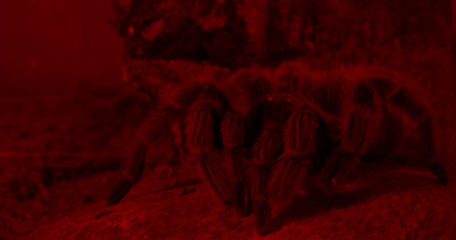 The picture NASA doesn't want you to know about...the spiders of Mars! :-)