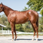 2019 Yearling Purchases