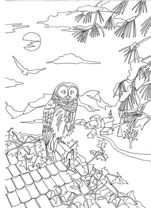 Раскраски сова, Раскраска Сова на крыше птицы.