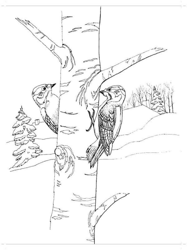 Раскраски дятел, Раскраска Дятел на дереве Дятел.