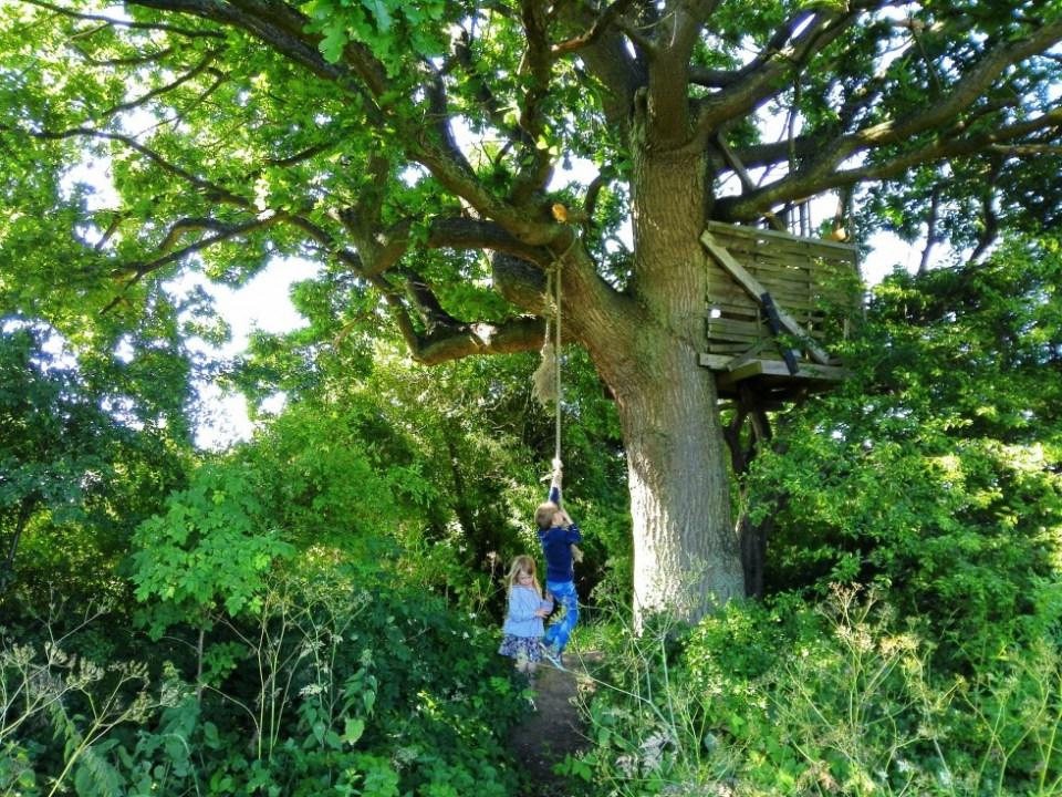 treehouse kolonihave hyldeblomstjagt