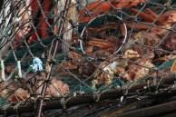 The Crabman's Catch