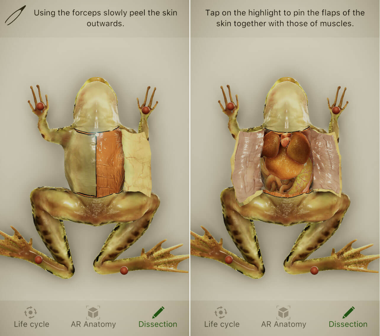Froggipedia A Virtual Dissection App Is Apple S Top Ipad