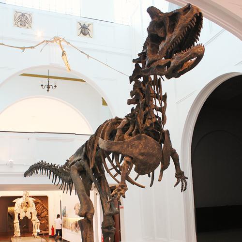 Conheça o Museu de Zoologia da USP em São Paulo