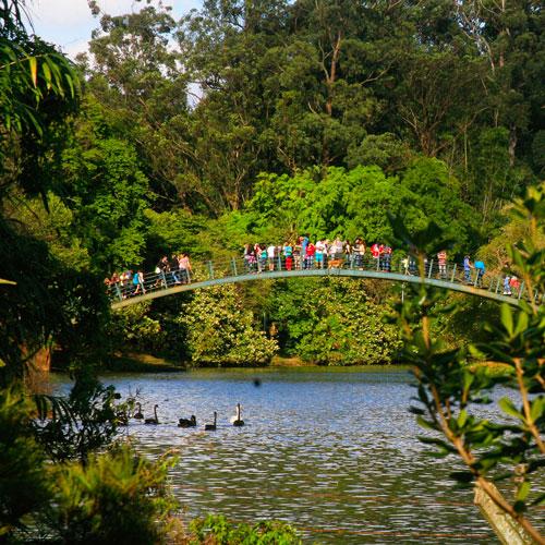 Saiba o que fazer no Parque Ibirapuera